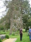 Mahavõetavate puude märkimine, 14.06.2011, K. Pets