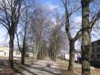 Vaade varakevadisle alleele. Puid on tugevdatud sidemega. 28.03.2012 Viktor Lõhmus
