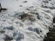 Lohukivi reg nr 10271. Foto: Ingmar Noorlaid, 11.04.2012.
