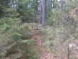 Idapoolse otsa teepoolne kääbas. Vanad ja noored puud koos. Foto: Viktor Lõhmus, 18.04.2012.