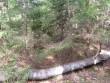 Vaade kääpale. Uus mets on tihedamaks läinud. Foto: Viktor Lõhmus, 18.04.2012.