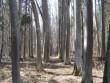 Joosu mõisa park. vaade pargisisesele alleele. 11.04.2012