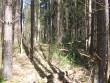 Vaade kääpale metsatuka sees. Foto: Viktor Lõhmus, 02.03.2012.