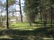 Teeäärne kääbas pildistatud põhjasuunast, majade suunast. Foto: Viktor Lõhmus, 02.05.2012.