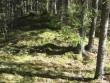 Vaade kääpale järjekorras XI Piigaste-Tsähkna endise tee ääres. Foto: Viktor Lõhmus, 04.05.2012.