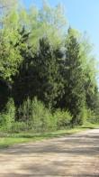 Vaade Oandimäe jalamil Otepää-Kintsli tee ääres asuvale mälestise tähisele loodest. Foto: Karin Vimberg, 14.05.2012.