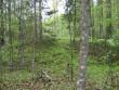 Kääbas rohelise katte all. Foto: Viktor Lõhmus, 16.05.2012.