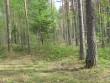 Vaade põhjapoolsetele kääbastele, tihedalt grupis koos. Maapinnast eriti ei eraldu. Foto: Viktor Lõhmus, 16.05.2012.
