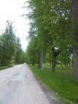 Raikküla mõisa sissesõidu allee. K. Klandorf 06.06.2012