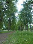 Raikküla mõisa sissesõidu allee parempoolne kahekordne puuderivi. K. Klandorf 06.06.2012