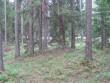 Vaade kääpale. Kääbas IV puid on hõredalt ja nähtavus hea. Foto: Viktor Lõhmus, 06.06.2012.
