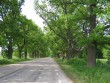 Vaade rasina pargi pikale alleele. 06.06.2012 Viktor Lõhmus
