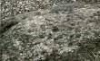 Kultusekivi - detailvaade kivi pinnast. Foto: E. Väljal, 20.10.1986.
