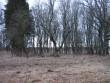 Noarootsi park ja kelder. Kalli Pets, 29.03.2012 048