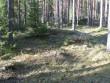 Kääbas. Foto: Tõnis Taavet, 24.04.2012.