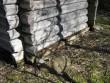 Jaagu meeaida alumisne palgikord, Kalli Pets,  30.03.2012 020
