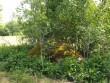 Foto: Triin Äärismaa, 08.06.2012