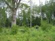Kalmel kasvavad üksikud tammed. Foto: Anne Kivi, 28.06.2012.