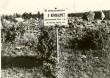 Kivikalmed reg nr 18218-18220. Foto: H. Joonuks, 1976.
