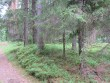 Vaade grupi edelapoolsele kääpale metsateelt. Kääbas saaanud tee rajamisega kannatada. Foto: Viktor Lõhmus, 04.07.2012.