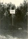 Kivikalmed 18362-18364, H. Joonuks, 1976