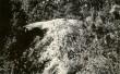 Kultusekivi - idast, A. Lavi, kevad 1979