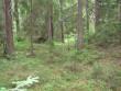 Vaade kääpale. Tagaplaanil sipelgapesa. Foto: Viktor Lõhmus, 04.07.2012.