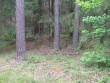Kirdeotsas on kääpad tihedalt pundis koos. Foto: Viktor Lõhmus, 04.07.2012.