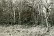 Kivikalme - kagust, E. Väljal, 12.okt.1984