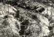 Ohvriallikas - kagust. Foto: E. Väljal, 24.04.1985.