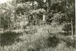 Linnamägi. Foto: A. Sillasoo, 29.09.1976.