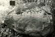 Ohvrikivi - lõunast. Foto: E. Väljal, 17.09.1984.