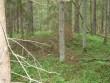 Vaade kääpale Tuulemurruga maha langenud puud. Foto: Viktor Lõhmus, 04.07.2012.