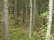 Kääbaskalmistu. Vaade ümarale kääpale põhjaosas. 03.07.2012 Viktor Lõhmus
