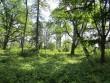 15660 Hulja mõisa park,   14.08.2012 Anne Kaldam