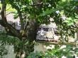 15659 Hulja mõisa peahoone ,vaadelõunast, näha hoone edelapoolse osa  katuses olev auk  ,   Anne Kaldam 14.08.2012