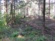 Vaade kääpale. Tihe noor mets segab kääpa kontuuri eraldamist. Foto: 16.08.2012.