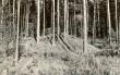Kääpad reg nr 11353-11365. Foto: M. Pakler, september1975.