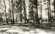 Kääbaskalmistu reg nr 11691-11702. Foto: M. Pakler.