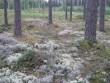 Kääbas on väikeste mõõtudega ja sulab metsamaastikku. Foto: Viktor Lõhmus, 29.08.2012.