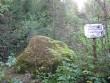 Vaade kivile hilissuvises metsas. Foto: Viktor Lõhmus, 05.09.2012.