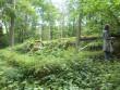 Mahalangenud puu Karja vanal kalmistul. Foto: R. Peirumaa, august 2012