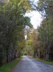 Kabala mõisa saareallee Koikse-Purku teel, vaade Kabala suunas. K. Klandorf 21.09.2012