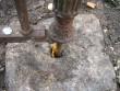 Rooslepa metallaia (Taube) aiaposti kinnitus.  Kalli Pets,  02.10.2012