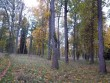 Ingliste mõisa park, vaade peahoone tagusele pargiosale. K. Klandorf 04.10.2012.