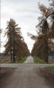 Aaspere mõisa allee, vaade põhjast üle Tallinn-Narva maantee. Foto: M.Abel 23.10.2012