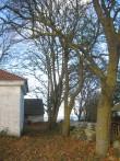 Jaani kiriku käärkamber ja puud selle taga. Foto: Rita Peirumaa, 31.10.2012