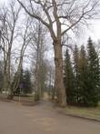 15040 Jäneda mõisa park, vaade 27.11.2012 Anne Kaldam