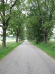 Vana-Antsla mõisa park. Foto Tõnis Taavet, 01.08.2012.