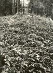 Linnamägi - vall kirdest. Foto: E. Väljal, 04.10.1984.